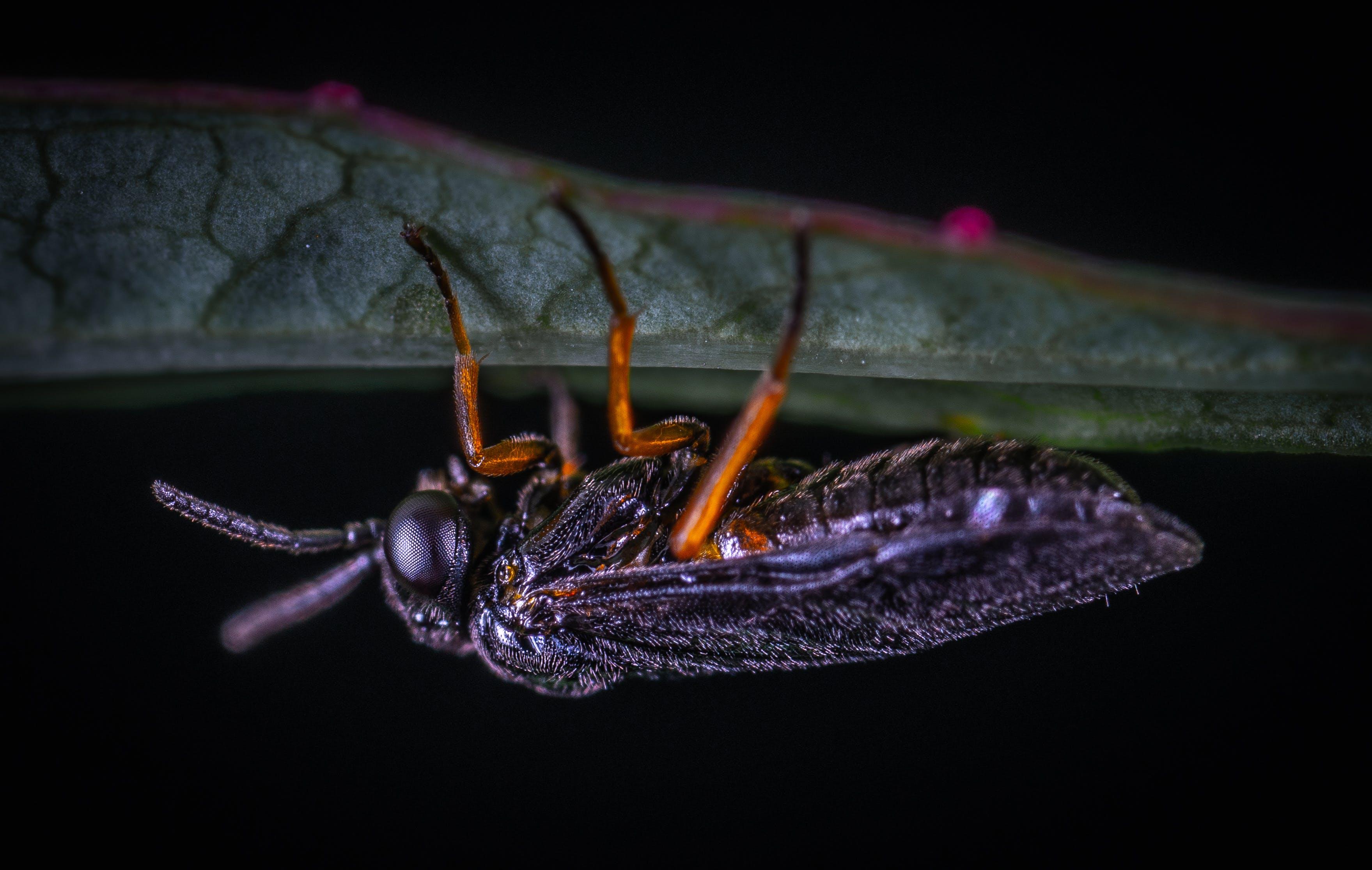 Kostenloses Stock Foto zu insekt, makro