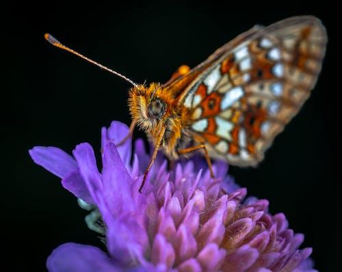 Základová fotografie zdarma na téma hmyz, makro, motýl