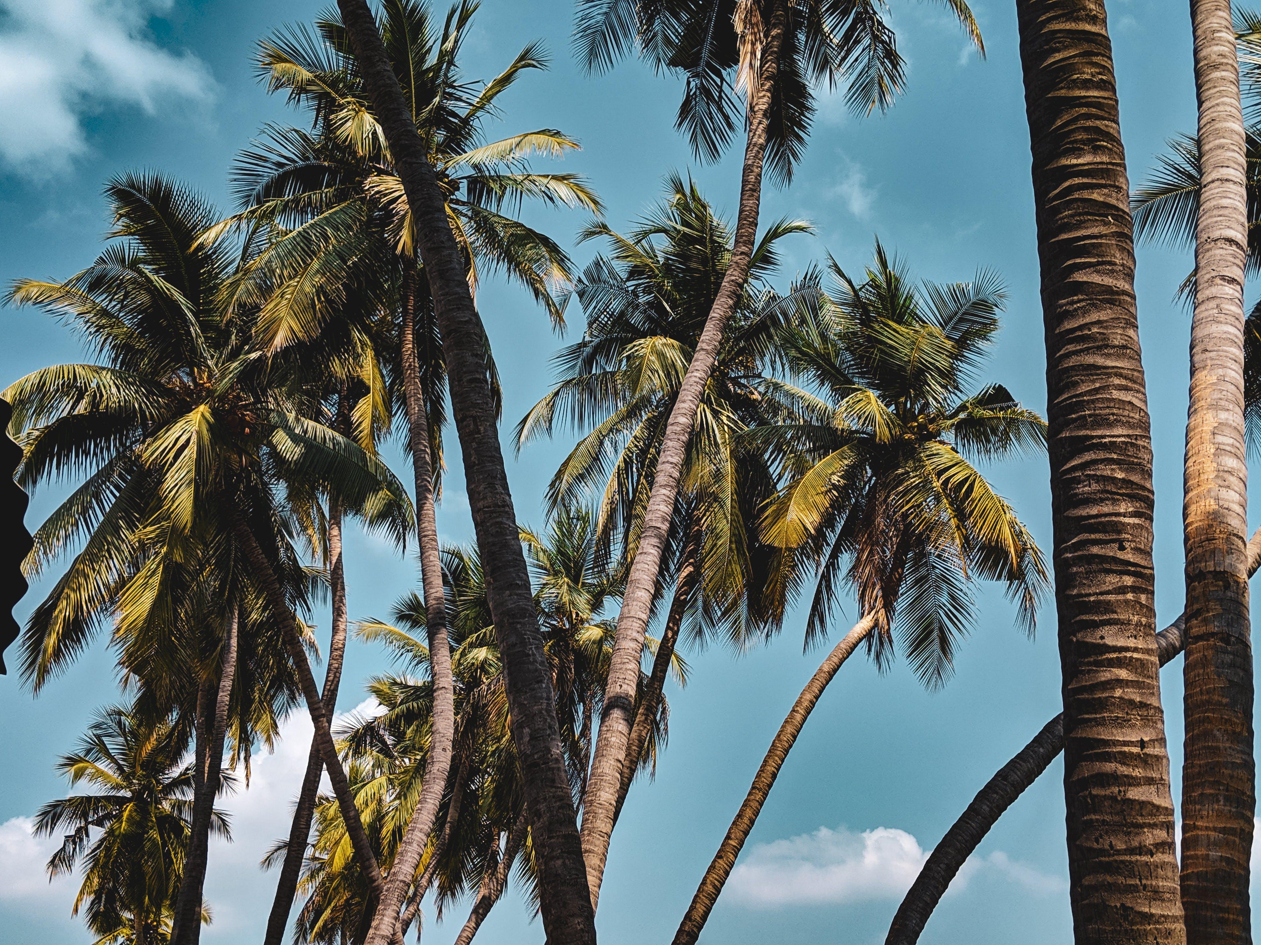 Gratis lagerfoto af blå himmel, himmelblå, høje træer, klar himmel