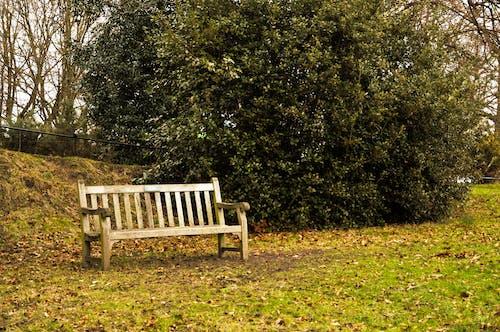 Immagine gratuita di catturare, foto, londra, momento