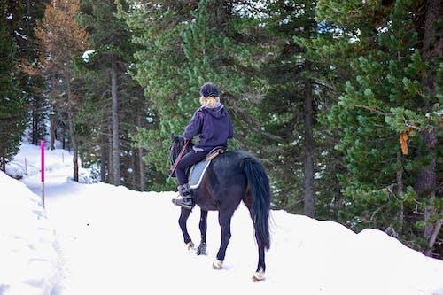 Foto stok gratis gunung, hutan, kuda, musim dingin