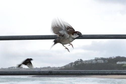 Základová fotografie zdarma na téma let, vrabec