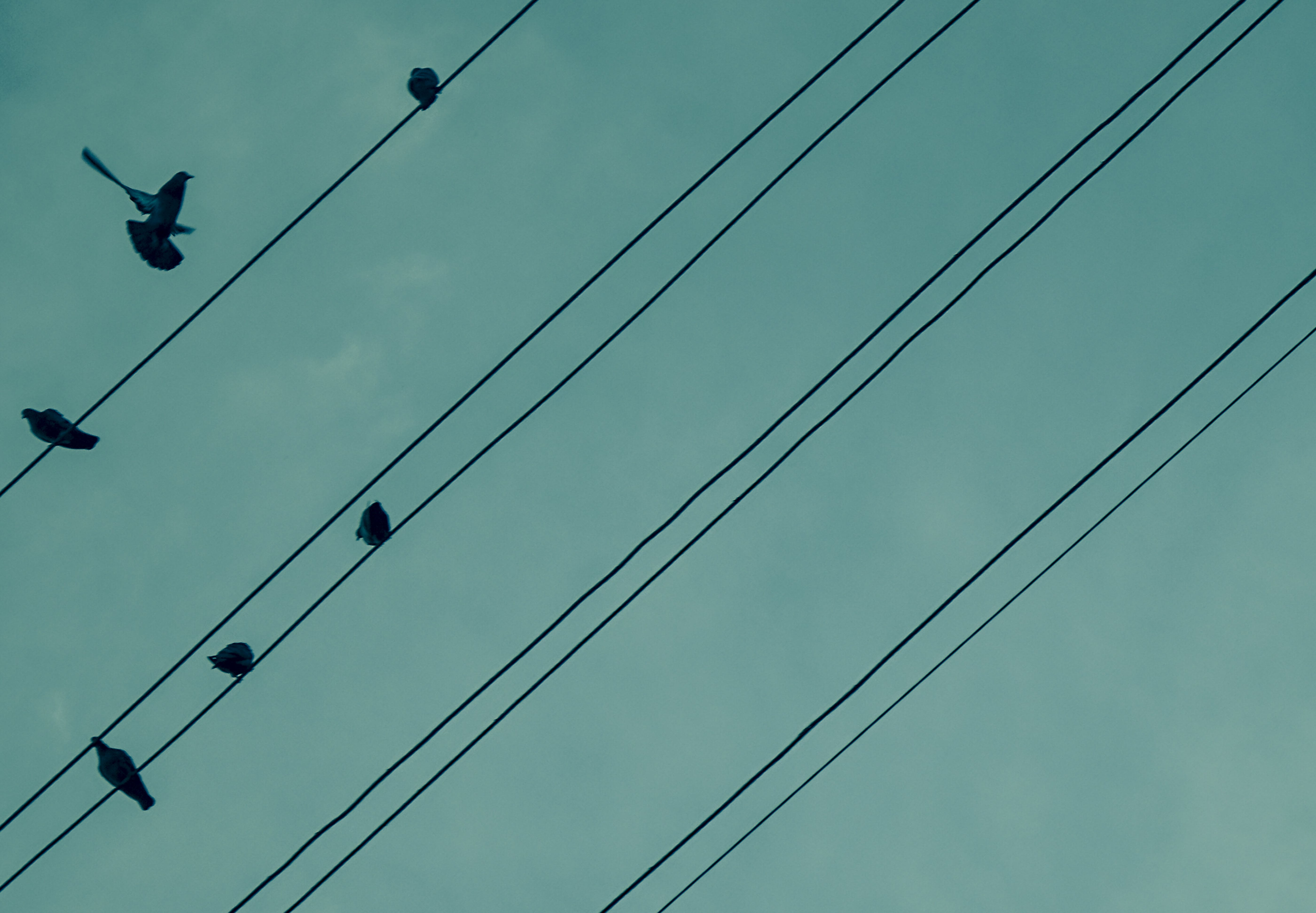 Free stock photo of blue, blue angel, cables, colors