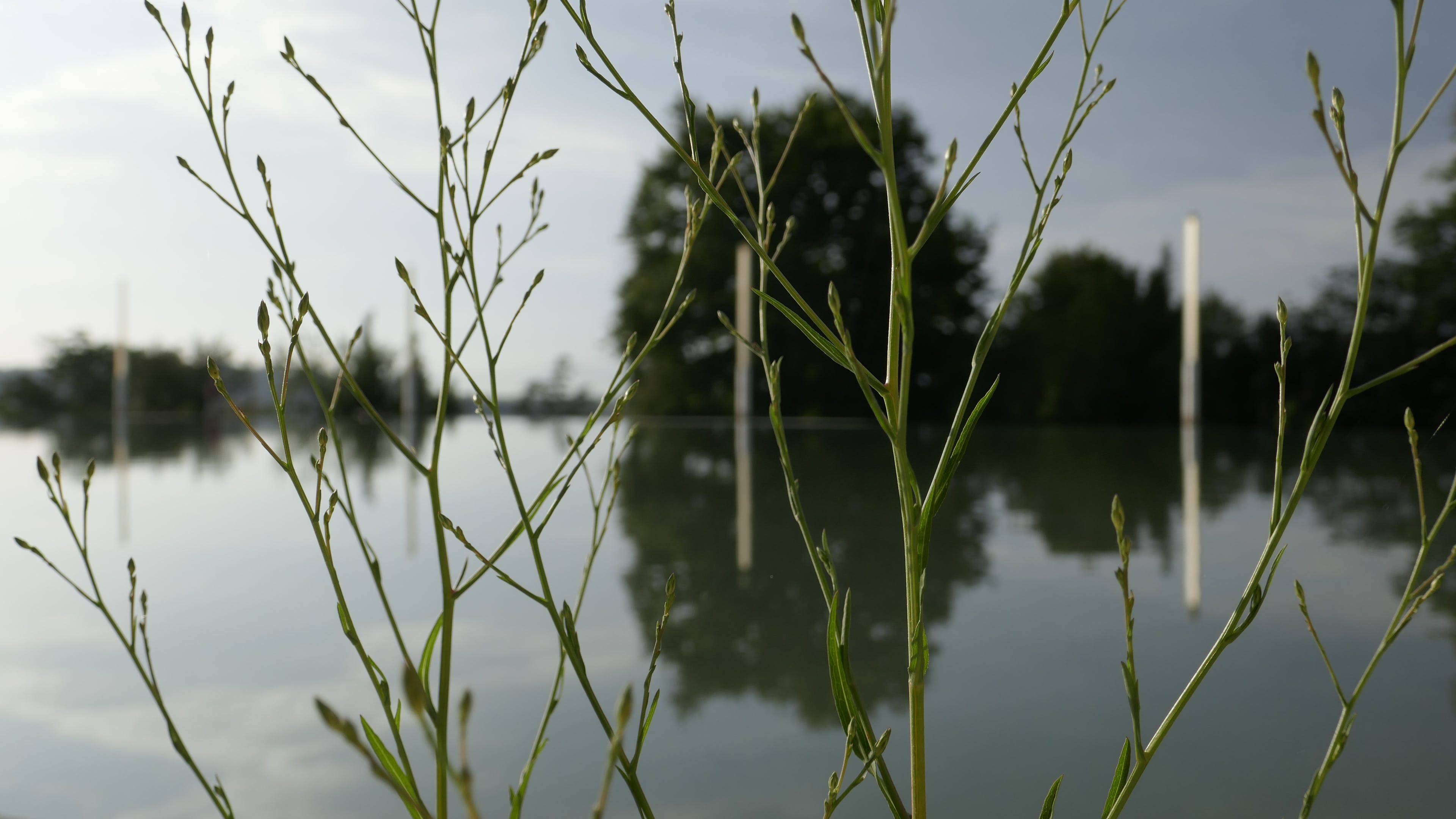 Free stock photo of aquatic plant, green plant and water, minimalist