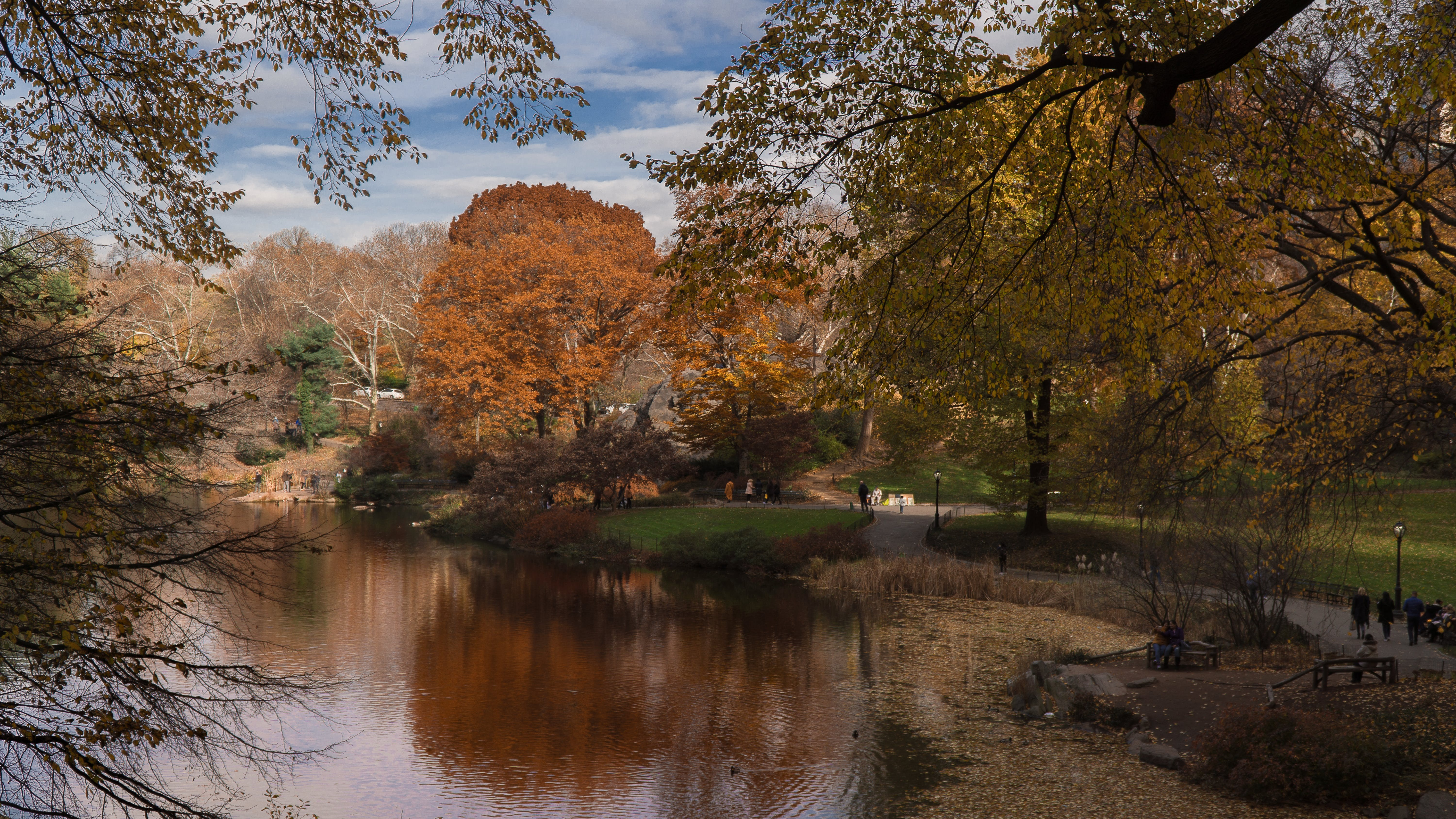 Free stock photo of central park, fall colors, fall foliage, fall leaves