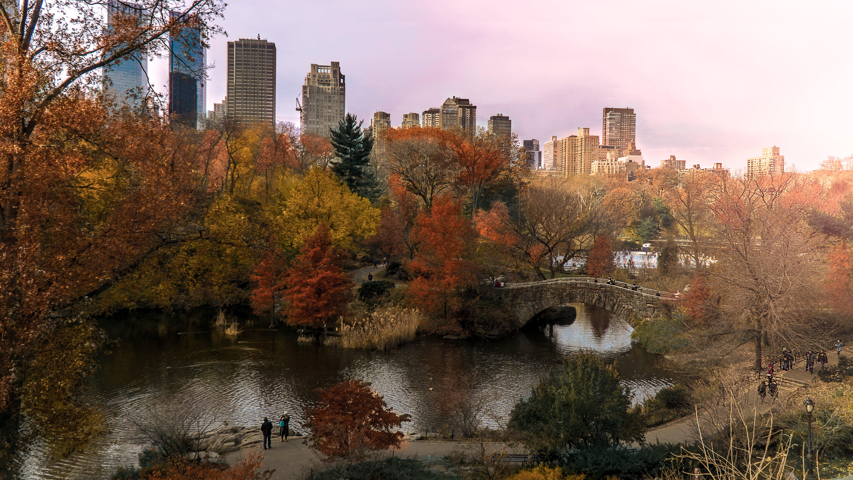 Kostenloses Stock Foto zu herbstfarben, herbstlaub, natur, naturpark
