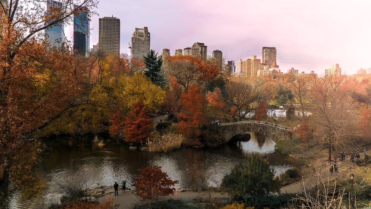 central park, fall colors, fall foliage