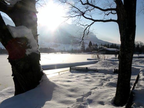 Foto d'estoc gratuïta de hivern, neu, paisatge d'hivern, paisatge hivernal