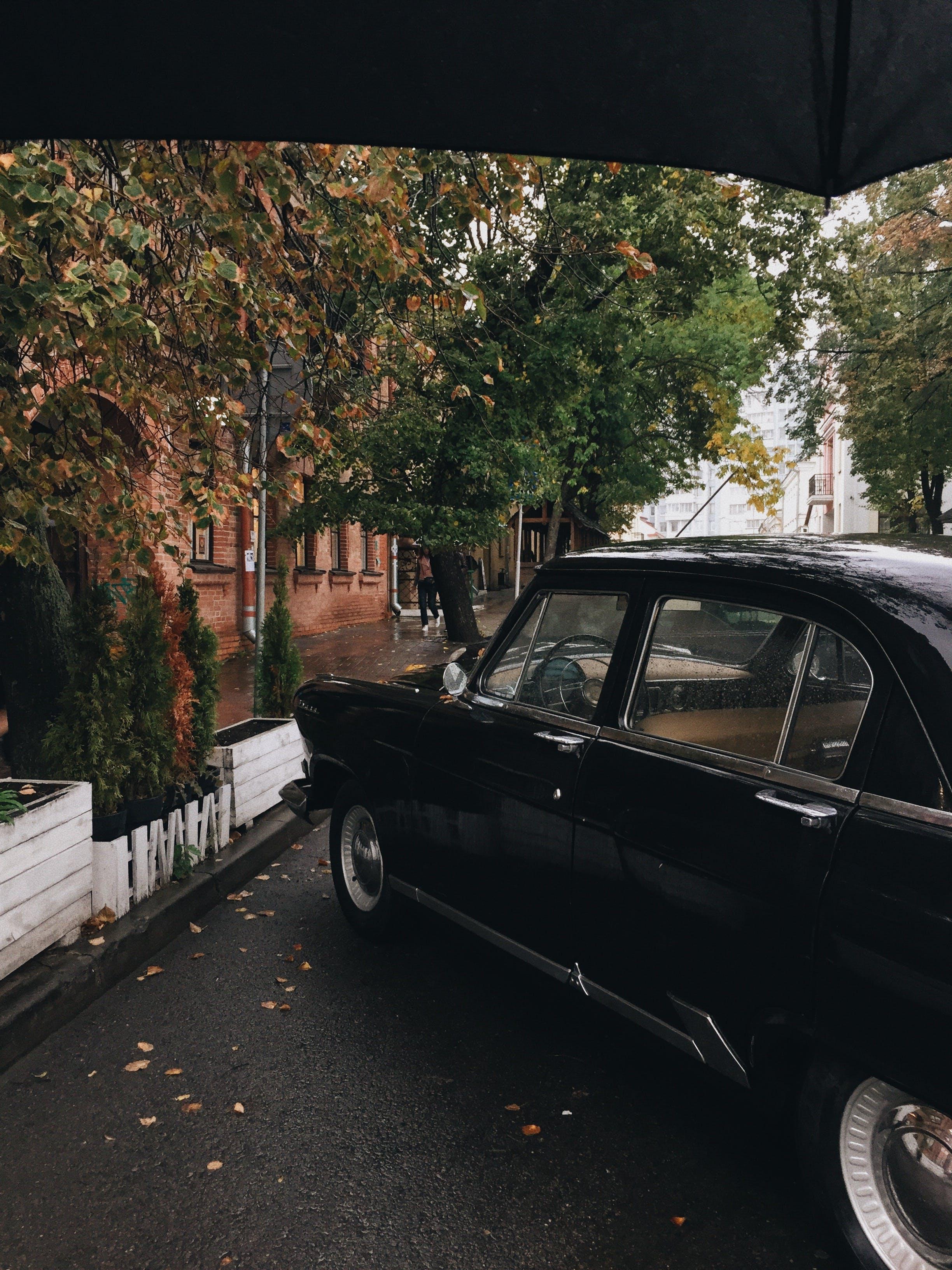 Black Sedan Parked Near Plants