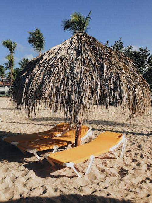 คลังภาพถ่ายฟรี ของ กลางวัน, การผ่อนคลาย, ชายหาด, ต้นปาล์ม