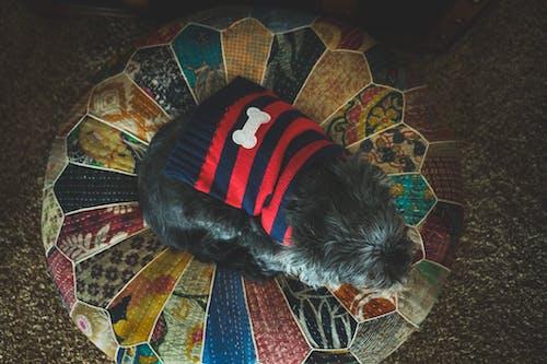 Darmowe zdjęcie z galerii z czarny, czarny pies, kość, ottaman