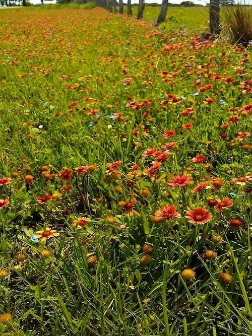 Foto profissional grátis de # natureza # flor # folhagem # laranja