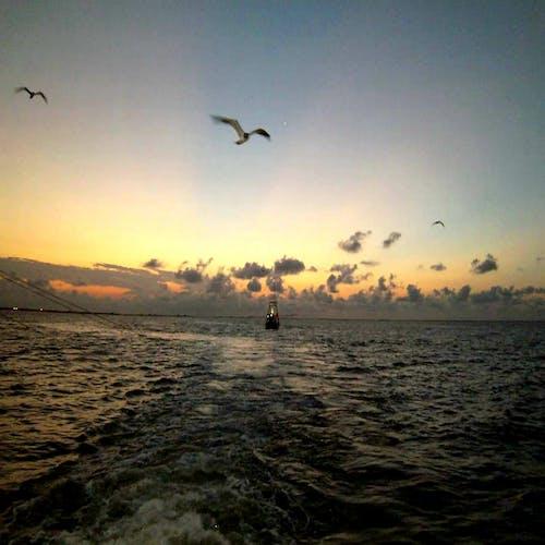 Foto profissional grátis de #nature #sky #clouds #sun #água #ocean #sunset