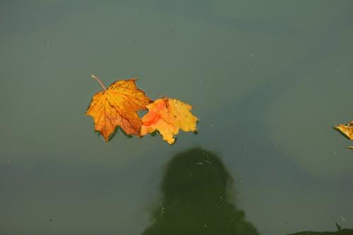 Immagine gratuita di acqua, colori autunnali, foglie d'acero, laghetto da giardino