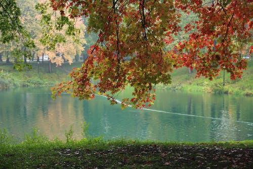 Immagine gratuita di acero, azzurro, canada, colori autunnali
