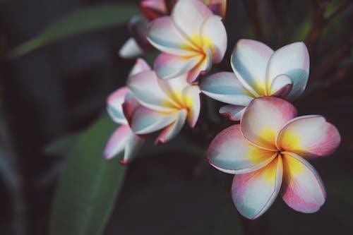 Foto stok gratis #flower #pink