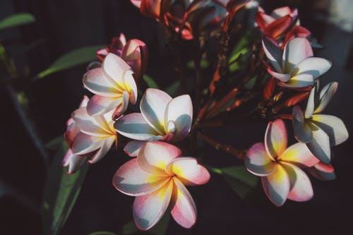Foto stok gratis #bunga