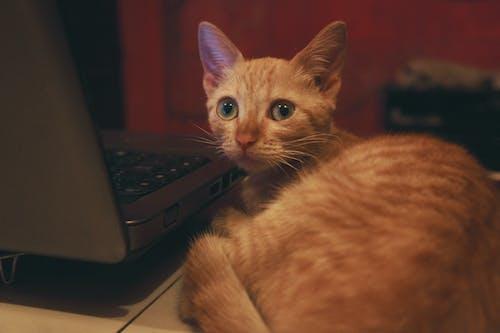 Foto stok gratis #cat #pet #animal
