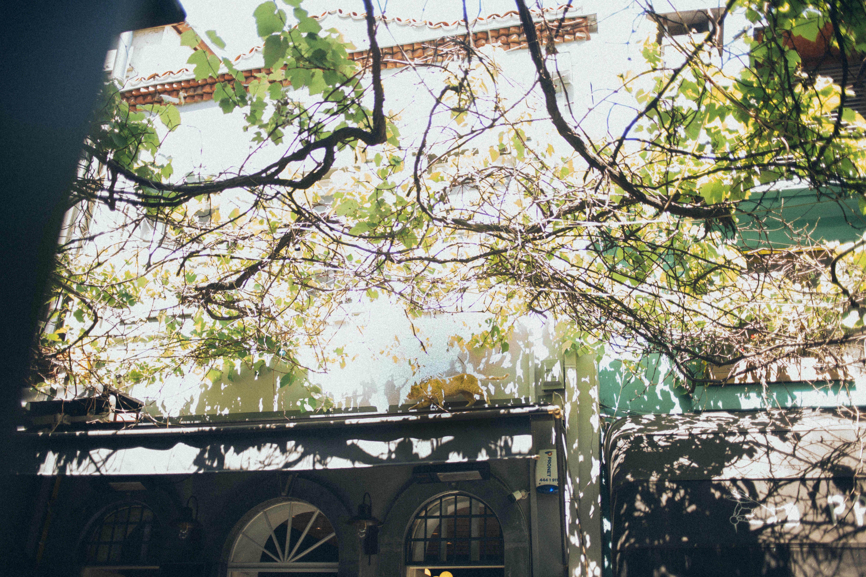 Foto d'estoc gratuïta de arbre, branques d'arbre, edifici
