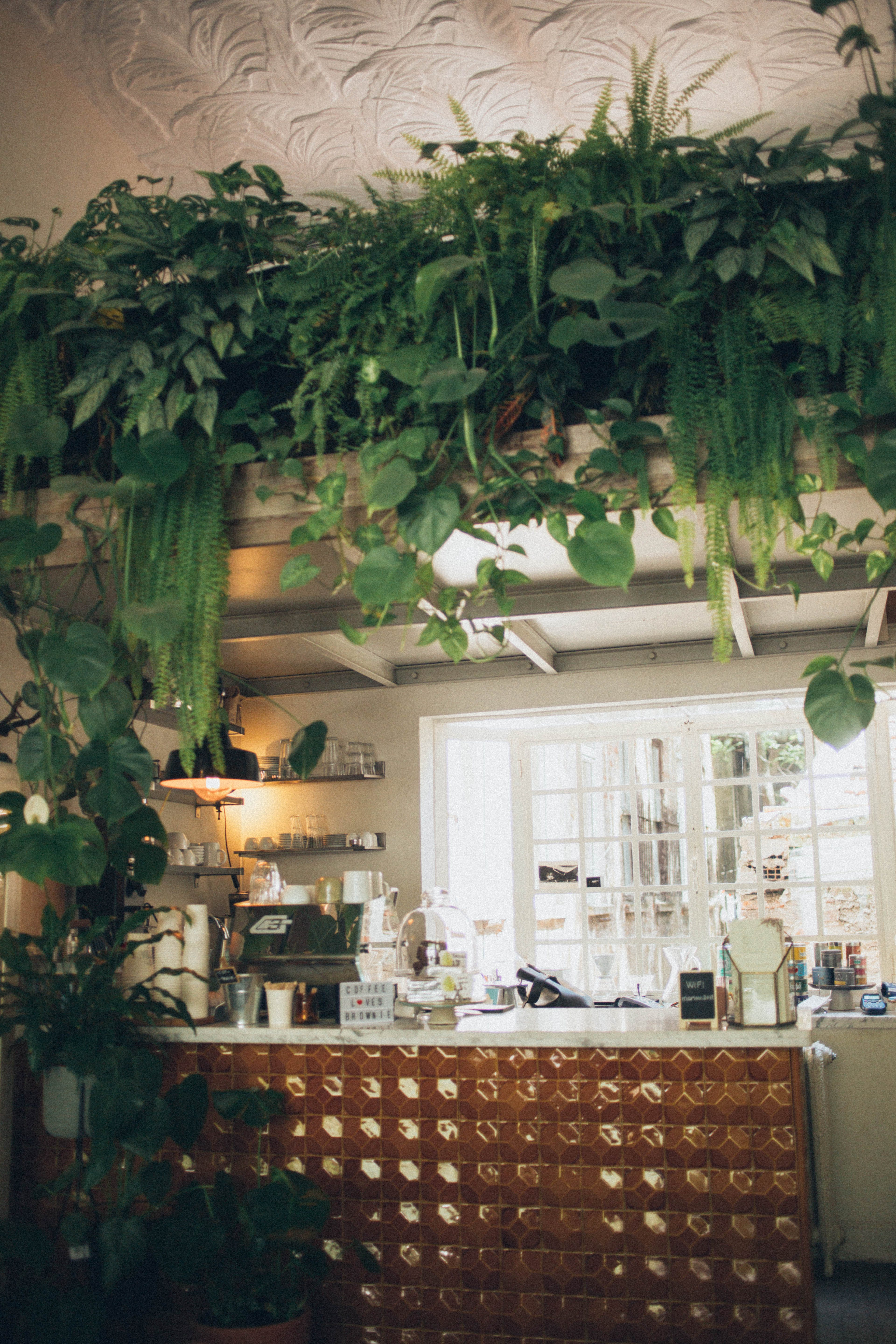 Kitchen Surrounded With Green House Plants