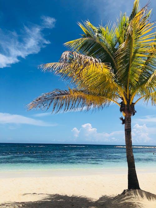 Foto d'estoc gratuïta de platja