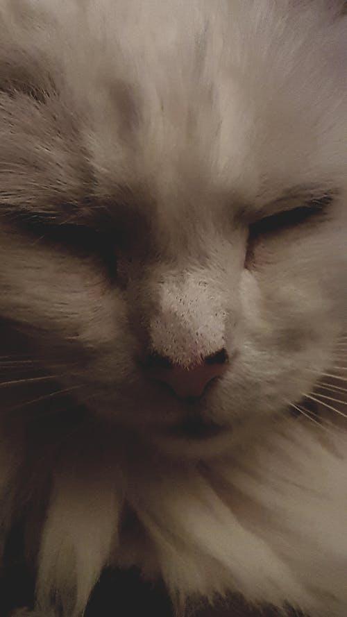 Foto profissional grátis de #cat #branco gato #abstract