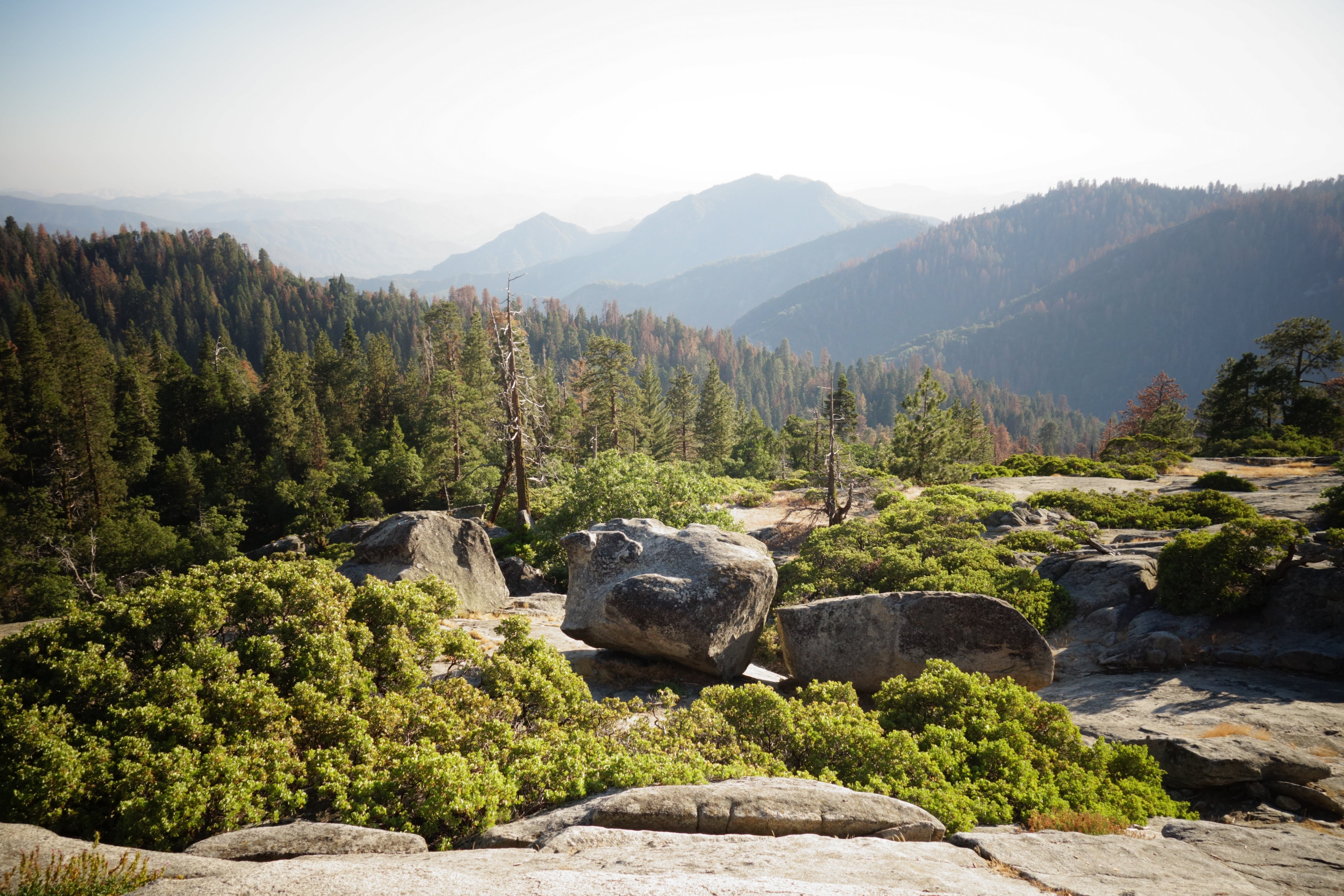 Rock Boulders on Mountain With Trees