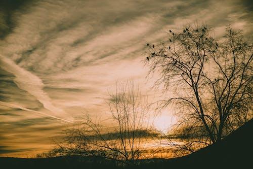 คลังภาพถ่ายฟรี ของ ดราม่า, ตอนเย็น, ตะวันลับฟ้า, ย้อนแสง