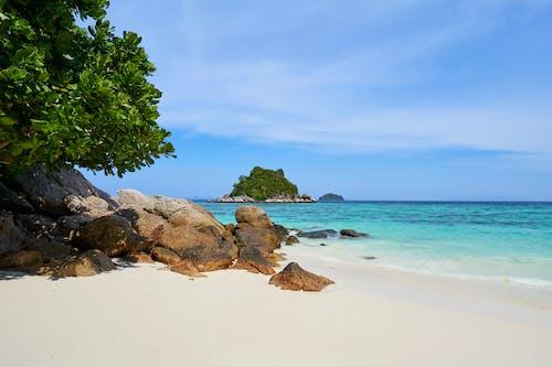 Photos gratuites de arbres, bord de mer, cailloux, calme