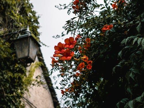 Бесплатное стоковое фото с глубина резкости, дерево, красивый, лепестки