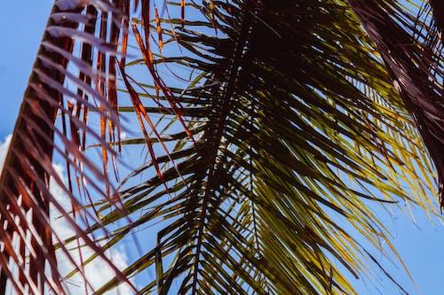 Δωρεάν στοκ φωτογραφιών με παράδεισος, παραλία, φοίνικας, φύλλα φοίνικα