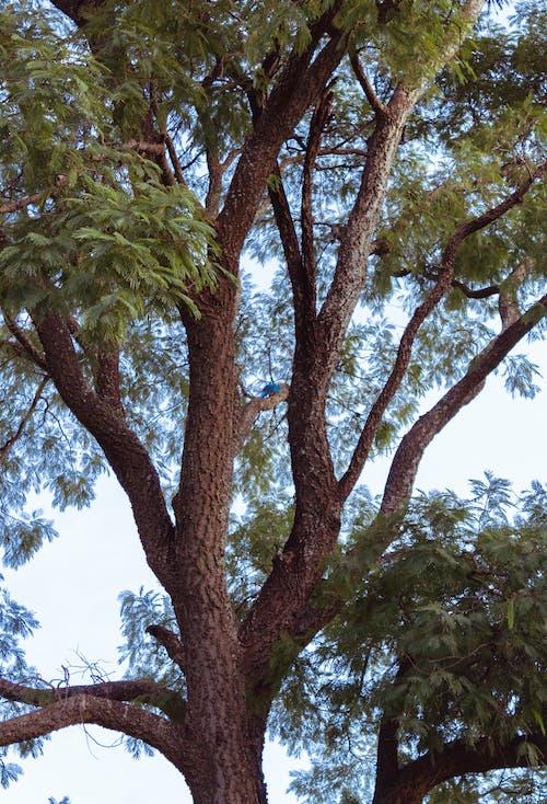 Δωρεάν στοκ φωτογραφιών με δέντρο, μακάο