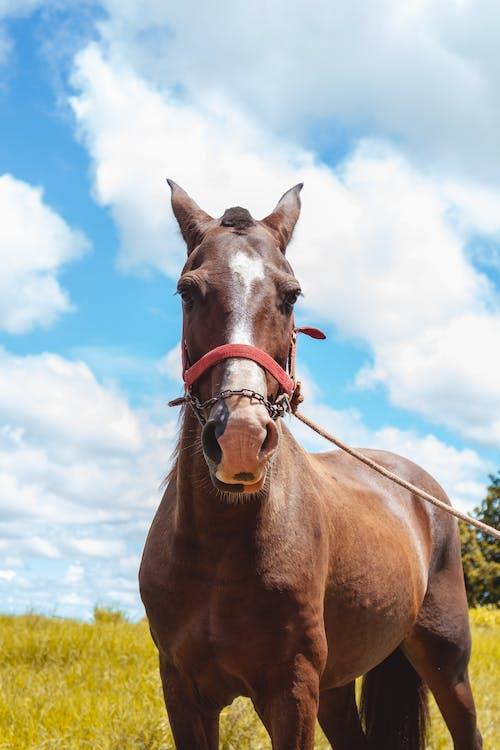 Δωρεάν στοκ φωτογραφιών με άλογο, εξοχική κατοικία, ζώα φάρμας