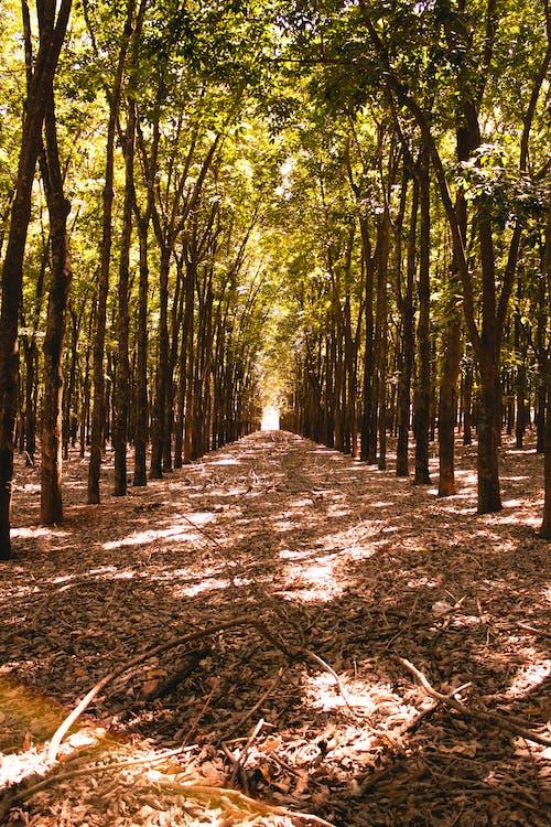 Δωρεάν στοκ φωτογραφιών με δασική διαδρομή, δασικός, δέντρο