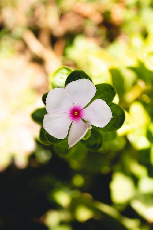 Δωρεάν στοκ φωτογραφιών με ανθίζω, κήπος