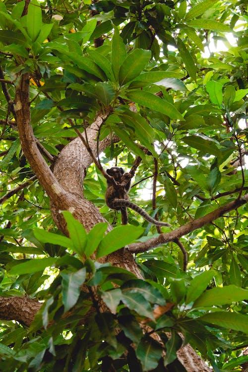 Δωρεάν στοκ φωτογραφιών με δασικός, δέντρο, πίθηκος
