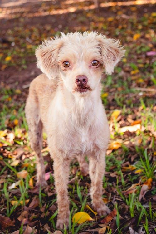 Δωρεάν στοκ φωτογραφιών με σκύλος