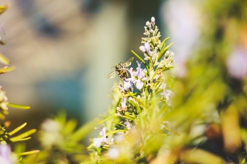 Photos gratuites de abeille, fleur, fleurs