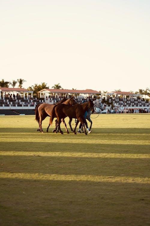 Základová fotografie zdarma na téma kůň