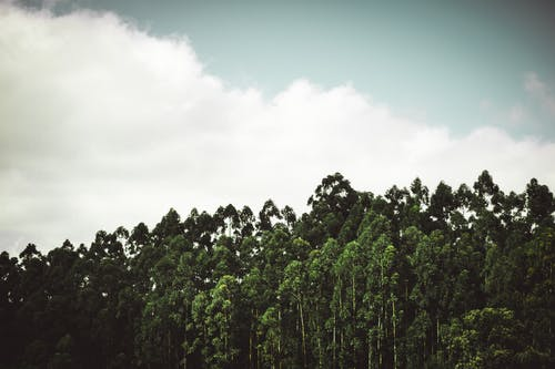 Free stock photo of cloudy, forest, moody