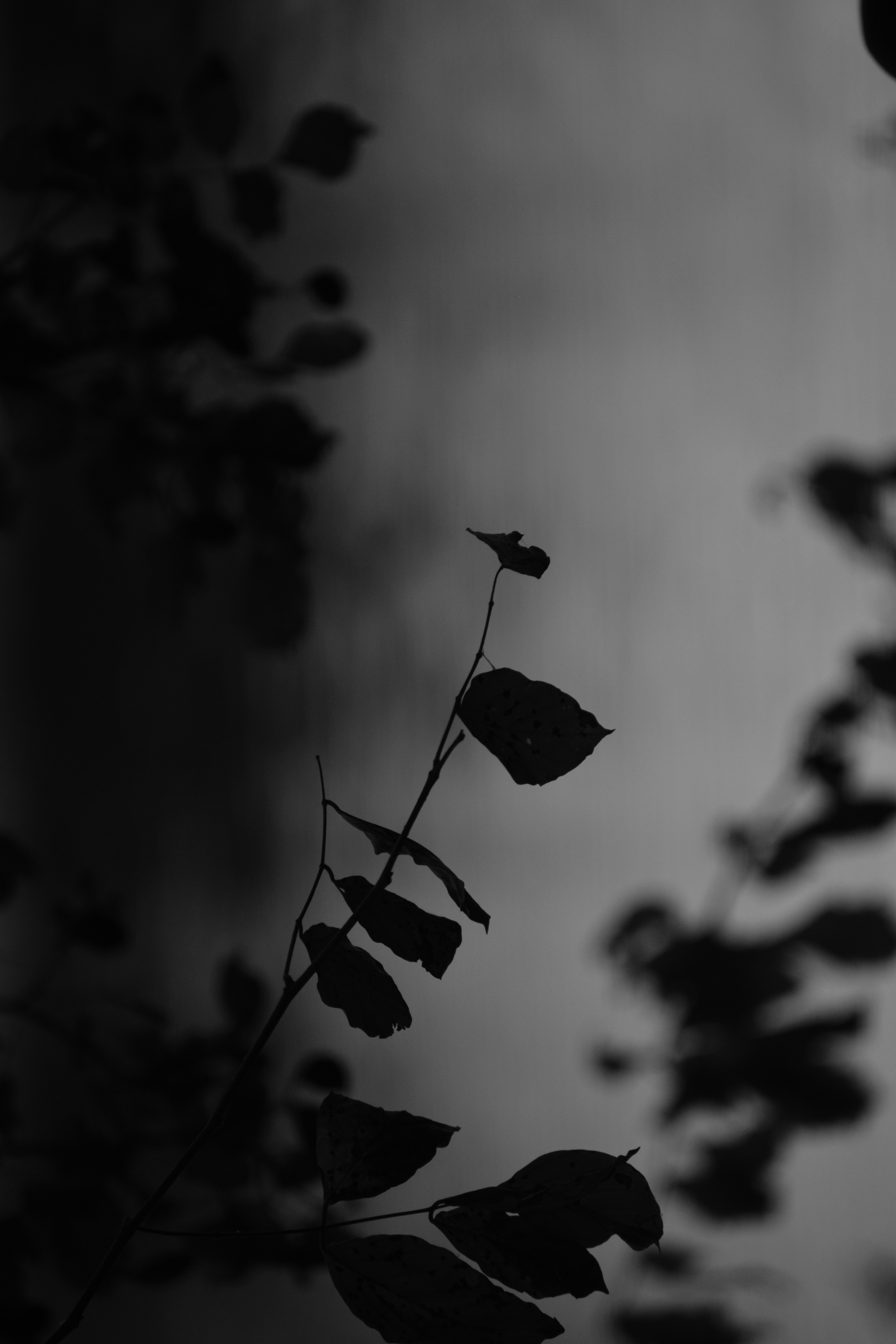 Free stock photo of black and white, dry leaf, light and shadow