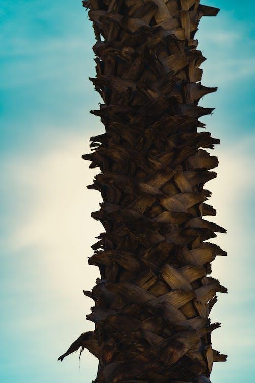Бесплатное стоковое фото с голубой, дерево, лос-анджелес, пальма