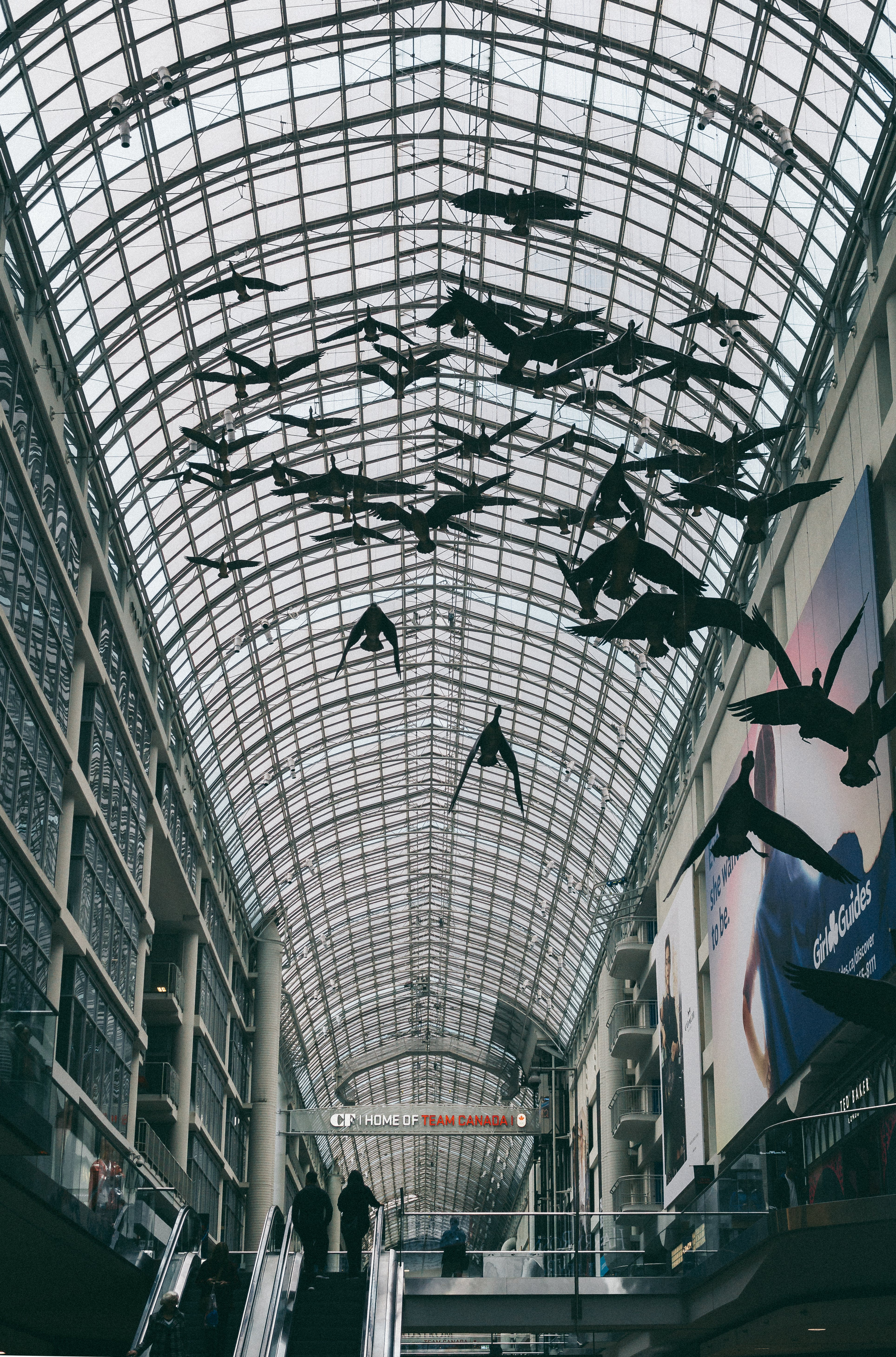 Free stock photo of artistic, birds, canada, Downtown toronto