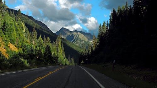 Foto stok gratis alam, bimbingan, gunung, hutan
