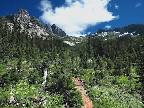 Darmowe zdjęcie z galerii z drzewa, góry, krajobraz, las
