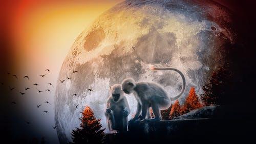 坐著的猴子, 月亮, 月亮冒險 的 免費圖庫相片