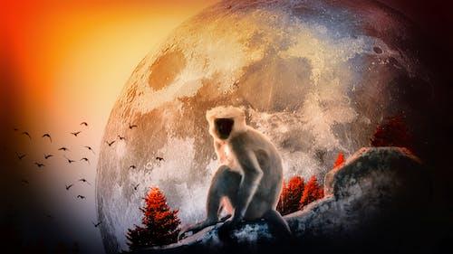 壁紙, 大月亮, 月亮, 猴子一個人 的 免費圖庫相片