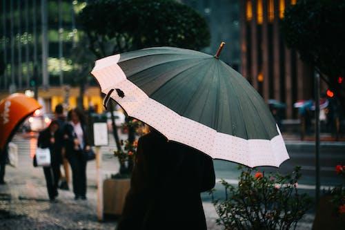 人, 傘, 歩く, 通りの無料の写真素材