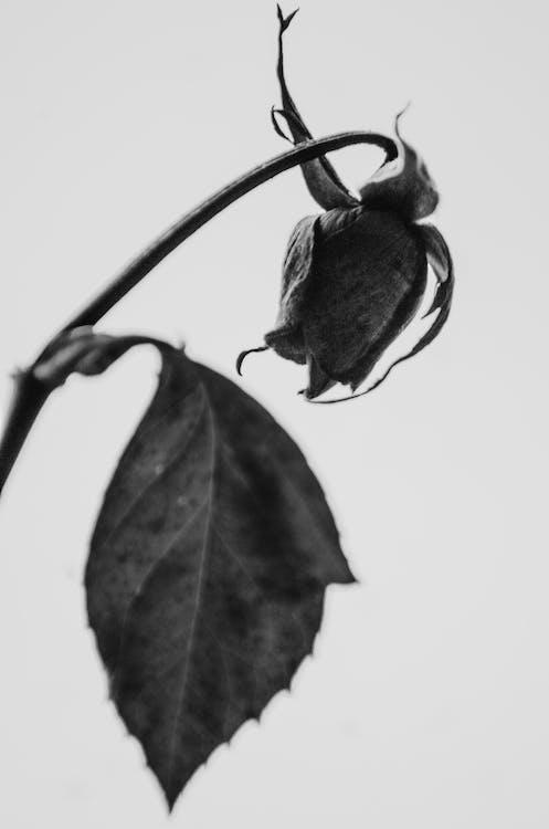 fleur, flore, noir et blanc
