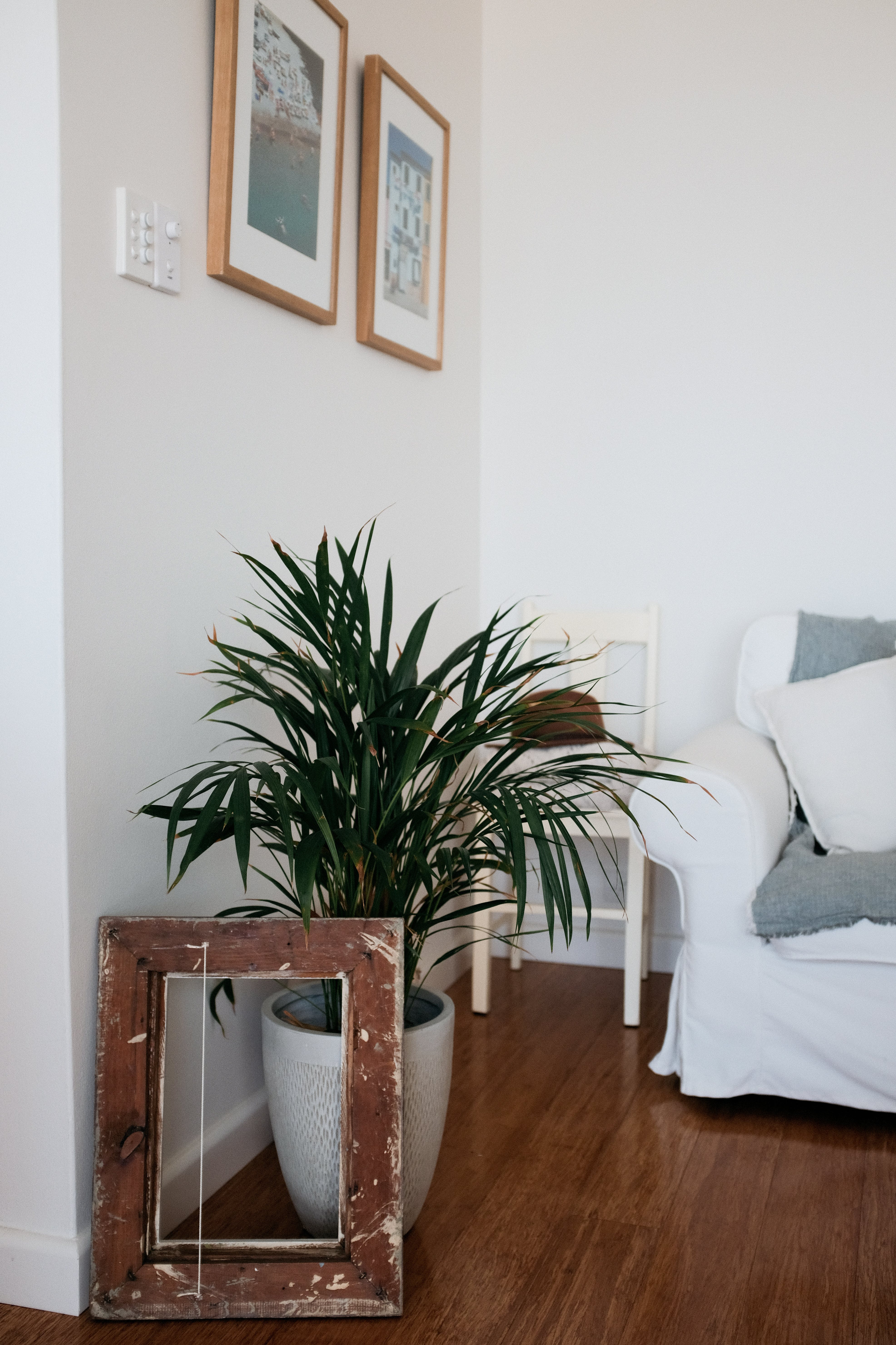 Square Brown Photo Frame Beside Green Leafed Plant and Wall